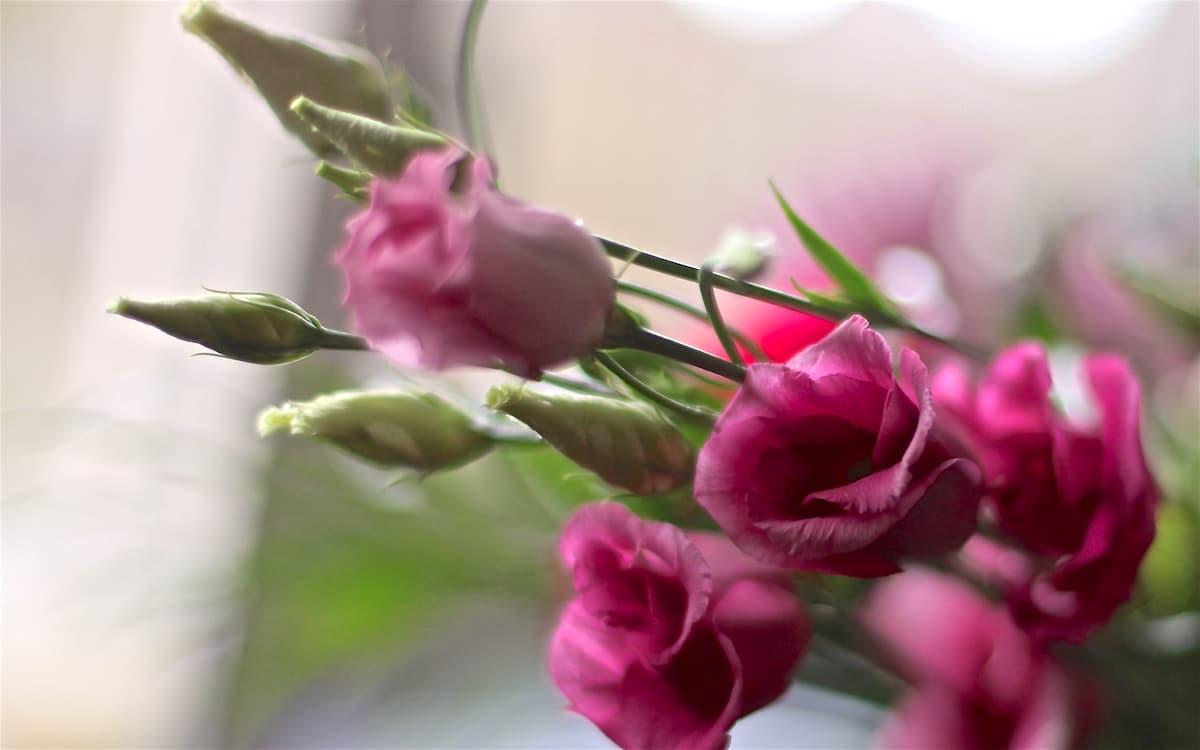 Tia Nijhuis, week 04, bloemen