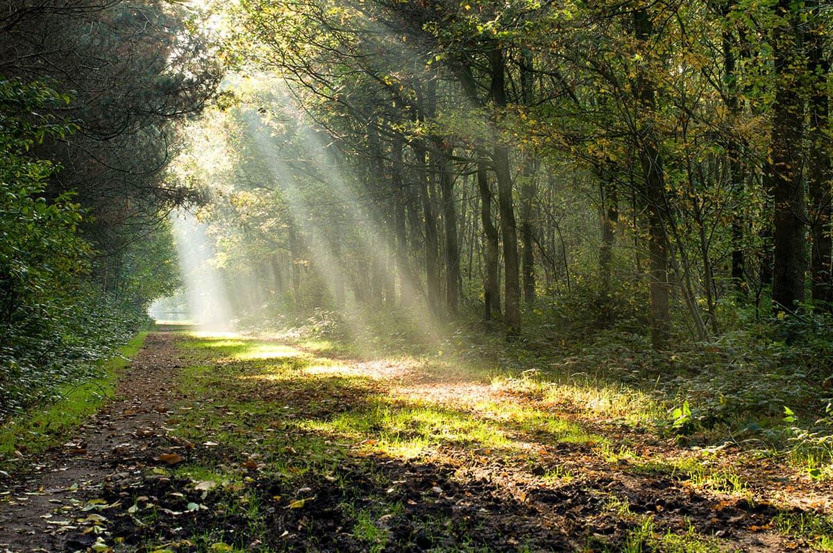 week 42, Magda De Meulenaere, bos, herfst, zonnestralen