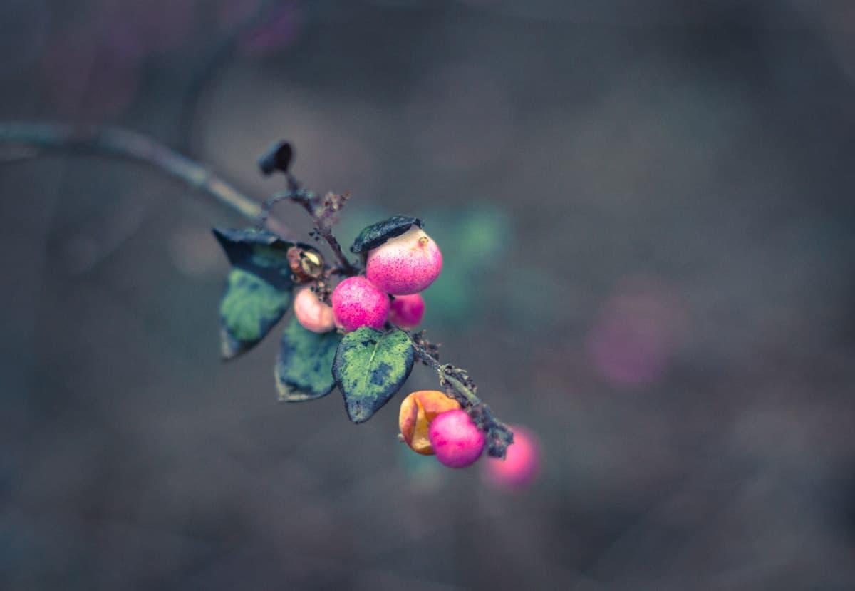 week_49_mona van rossum